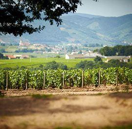 La Grappille est située à Villié-Morgon dans les crus du Beaujolais.  Trois magnifique chambres d'hôtes sont proposées avec une superbe vue sur les vignes de Morgon.