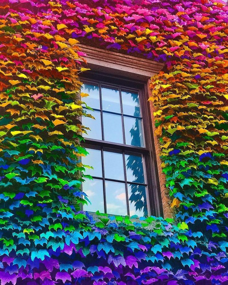 New York Artist Covers Pictures In Rainbows Because Everything Is