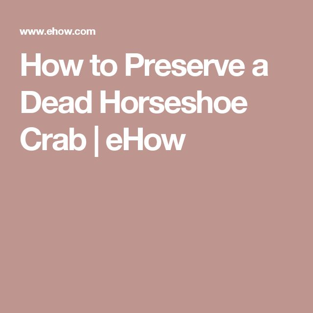 How to Preserve a Dead Horseshoe Crab | eHow