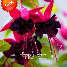 Новое прибытие!  Двухместные Фиолетовый Лепестки фуксия фуксия цветы Семена Семена 50 Семена горшечных цветов в горшках растения Подвески / Lot, # HQ5X17 (Китай (материк))