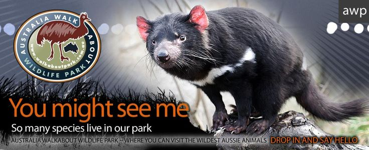 Walkabout Wildlife Park - near Gosford.  This would be a great day out with the kids