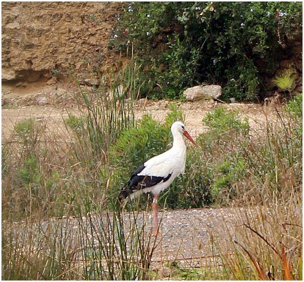 A bird in Park HaHursot