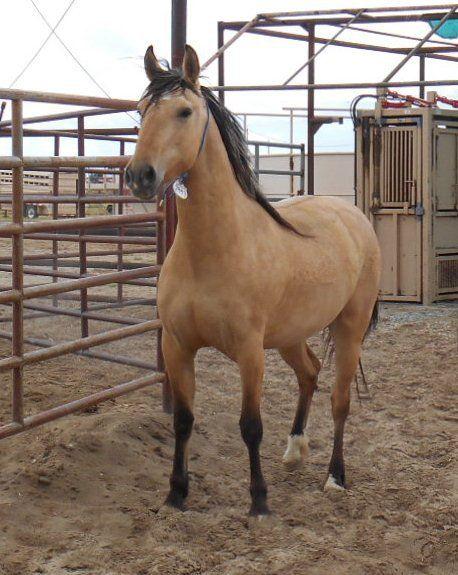 Bureau of Land Management Wild Horse and Burro Internet Adoption
