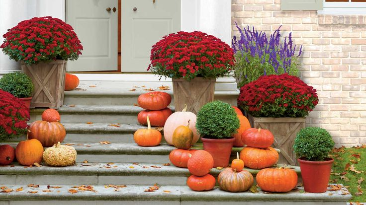 Bring a seasonal splash of color to your entryway by mixing and matching eye-popping blooms with rustic grasses and foliage in your fall container gardens.