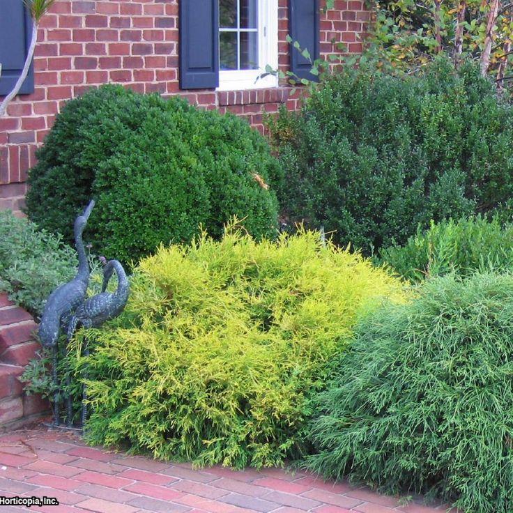 Ideas For Flowers In Backyard: 12 Best Backyard Garden Images On Pinterest