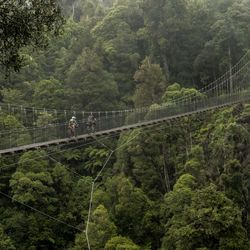 The Timber Trail passes through magnificent podocarp forests , as well as some exotic forestry, offering extensive views of the surrounding landscape.
