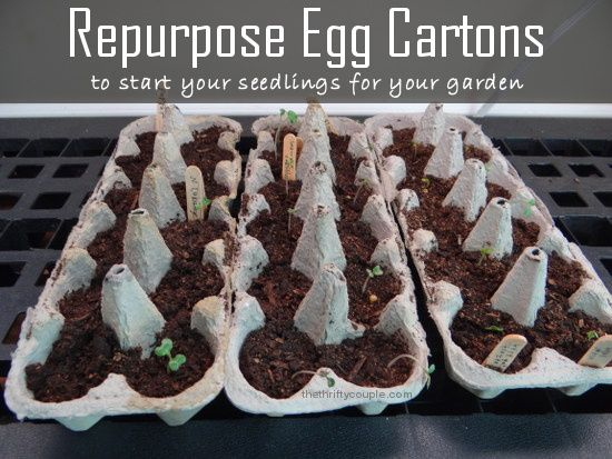 Repurpose egg cartons to start your seedlings for your garden.  Plus see our garden updates for this year!