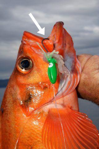 Angeln mit Circle Hooks   Fishing with circle hooks