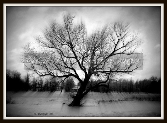 The Old Tree. 5 x 7  by KaEPhotography on Etsy, $20.00