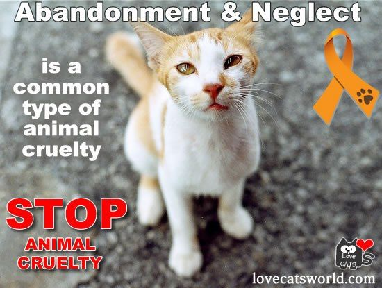 All U.S. states have animal cruelty laws, and 46 states and District of Columbia treat some forms of abuse as felonies. >> Read more... http://lovecatsworld.com/catrescuers/?p=897