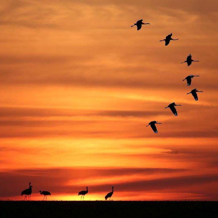 When the #cranes are heading south they make a stopover at my #littlelake Wenn die #kraniche ziehen machen sie gerne auf unserer #seenplatte Station. . . . #regionvogelsberg #vogelsberg_fotos  #canondeutschland #vogelsberg #vulkanregionvogelsberg #landscape#landscapelovers#landscapepics #landscapeview#landscaper #nature_seekers #natureseeker  #fiftyshades_of_twilight #lesothers #womenwhotravel #wanderlust #zugvögel #kranich #oberhessen #visithessen #ig_hessen #kreis_anzeiger #nextstopnature…