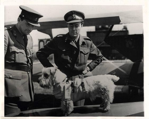 """1944- """"Martin"""", Sealyham hond in handen van prins Bernhard van Nederland (rechts), toont zijn bijzondere parachute harnas voor de leden van het Nederlandse personeel in een station RAF in Engeland."""