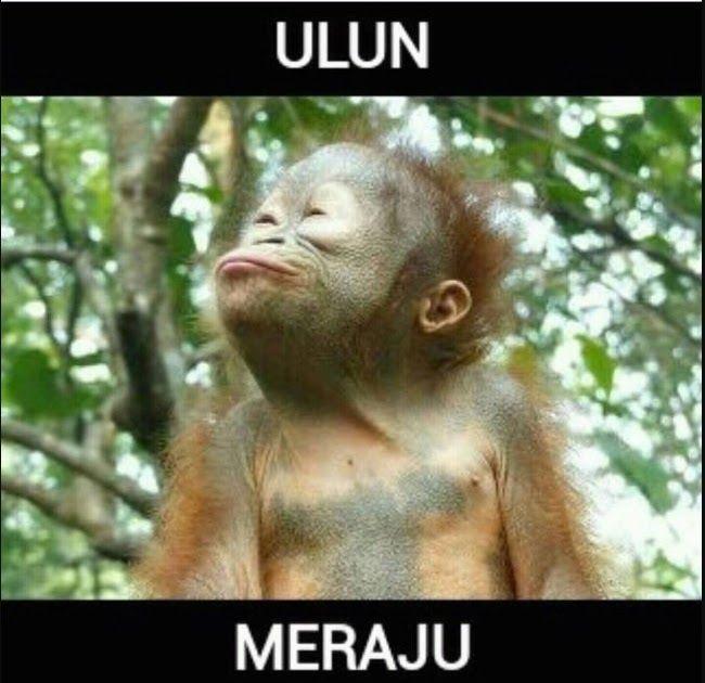 Terkeren 30 Gambar Monyet Lucu Hd Gambar Monyet Lucu Bahasa Minang Sigambar Baru From Sigambarbaru Com Deretan Gambar Mony Lucu Cartoon Jokes Gambar Lucu