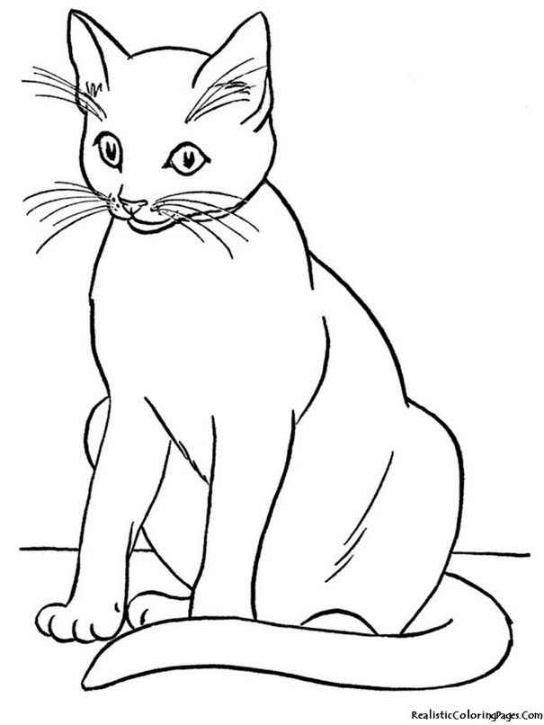 Coloring Page Cats Hd Coloring Pages Pinterest Cat Coloring