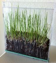 La germination - cycle de vie des plantes  Sanleane nous propose 3 idées différentes + les fiches