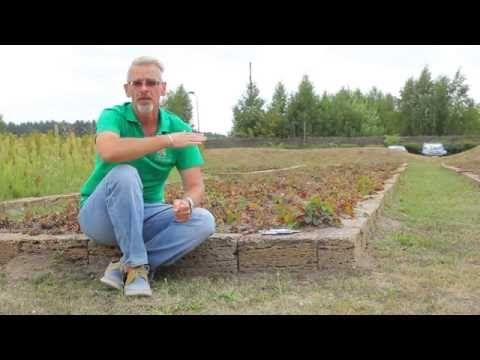 (2) Сеем огород в августе - сентябре. - YouTube