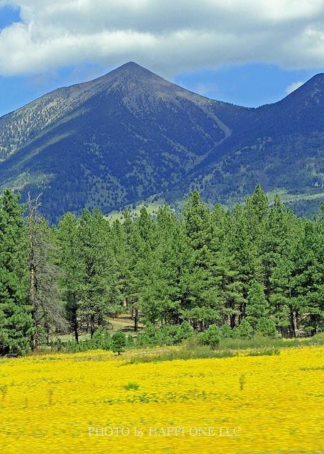 El precioso verano en Flagstaff, AZ