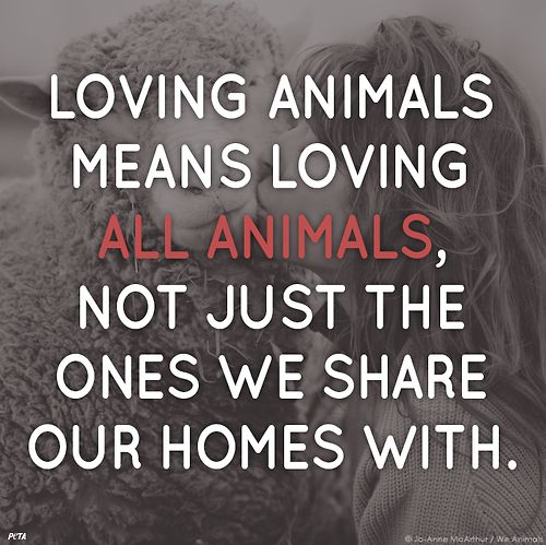 Loving animals means loving all animals, not just the ones we share our homes with.