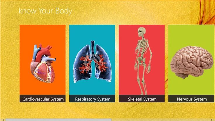 Did you know that your body has 206 bones ?Want to Know more about bodyCome and explore.
