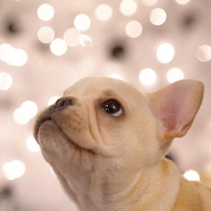 Shine bright like a diamond  by frenchieleo http://ift.tt/1Pbejus