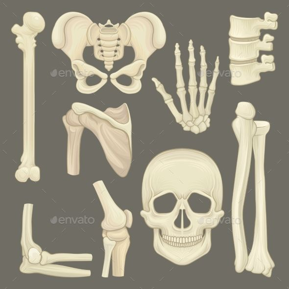 The 25 best skeleton parts ideas on pinterest diy halloween parts of human skeleton fandeluxe Image collections