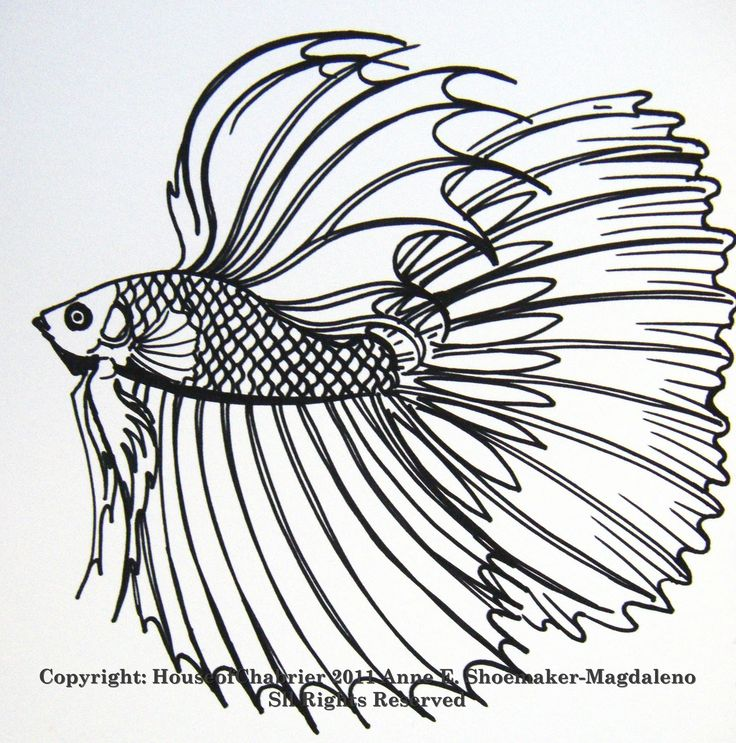 252 beste afbeeldingen over laurie to color op pinterest for Betta fish coloring pages