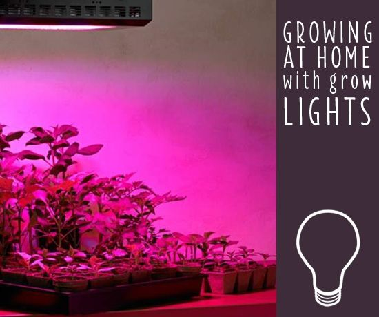 How To Choose The Best Grow Lights For Indoor Plants With 400 x 300