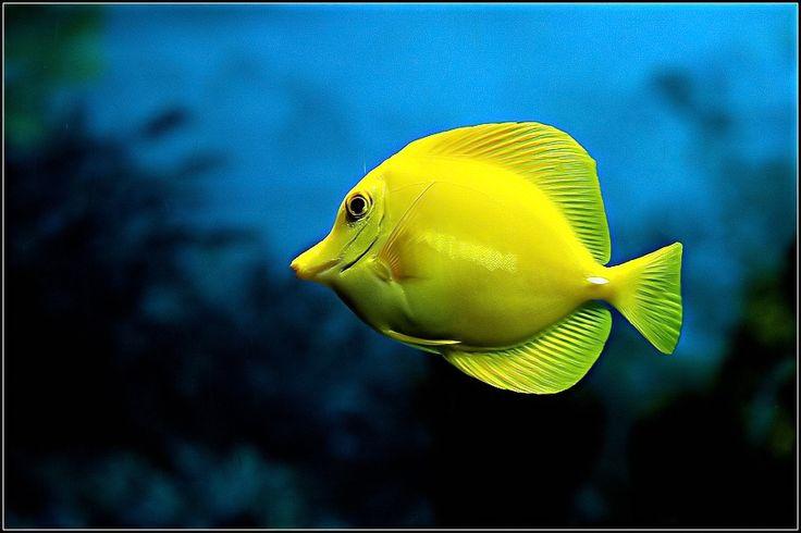 121 best saltwater aquarium reef images on pinterest for Discount aquarium fish and reef