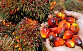 Nigeria: The Lie Told Against Palm Oil By the West. We sell it http://www.nomadicommerce.online/content/supply-palm-oil