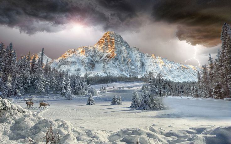 Earth Mount Chephren  Canadian Rockies Valley Winter Landscape Forest Cloud Mountain Earth Tree Snow Deer Wallpaper