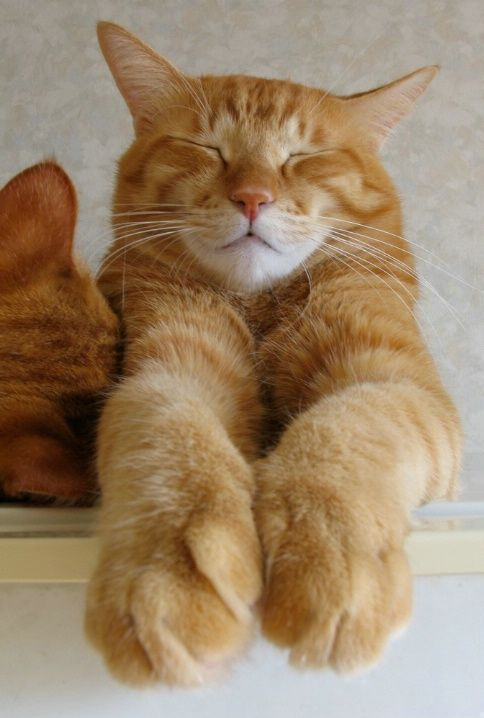 I love orange kitties !!!
