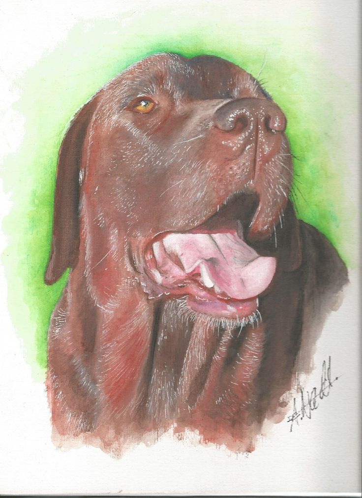 realistic drawing of a Labrador