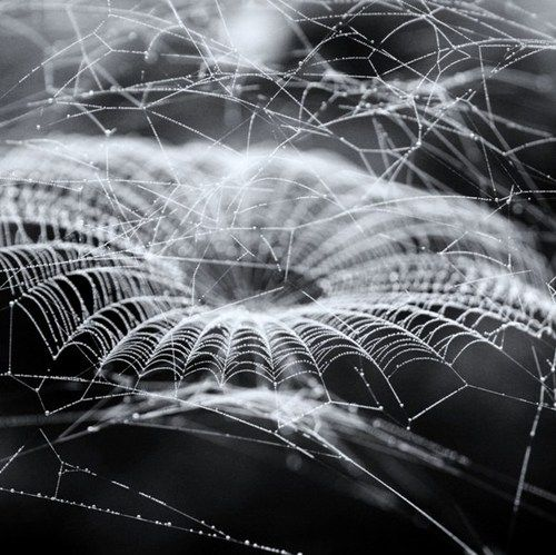 Anyone notice how much this frost covered full size spider web looks like a 3D three dimensional graphics rendering of a BLACK HOLE in the universe? Many things in outer space have similar counterparts in the tiny inner world - especially galaxies that look like eyes with pupil, iris, retina. #DdO:) MOST POPULAR RE-PINS - http://www.pinterest.com/DianaDeeOsborne/universe-lights/ - Black and white micro photography art of nature and insects. Intriguing pin via krea.