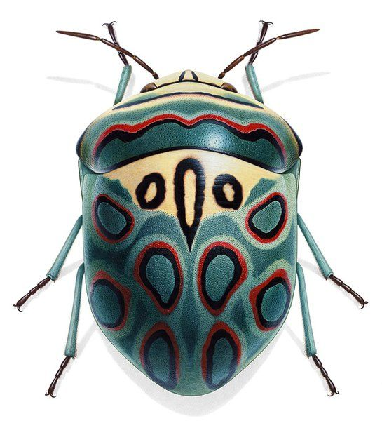 Bizarr, elegant, zauberhaft: Die Insekten, die der Franzose Bernard Durin illustriert hat, vereinen Kunst und Wissenschaft. Ein Bildband zeigt sie in ihrer vollen Pracht.