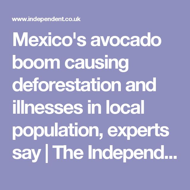 Mexico's avocado boom causing deforestation and illnesses in local population, experts say | The Independent