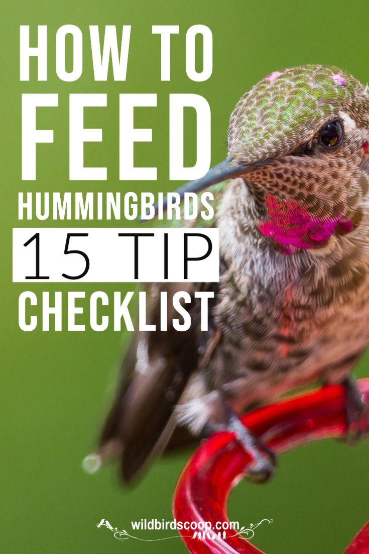 Do You Know How To Attract Hummingbirds In 2020 Wild Birds Hummingbird Nectar Recipe Attract Wild Birds