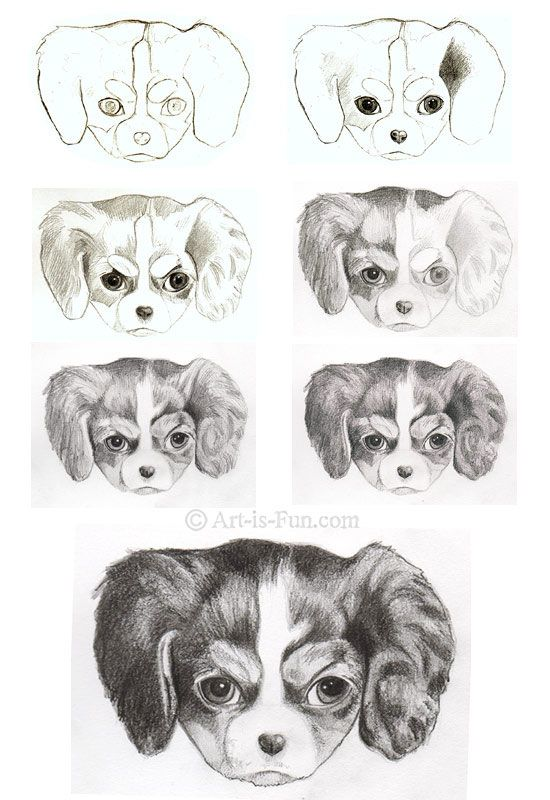How to Draw a Puppy: Learn How to Draw Puppies!