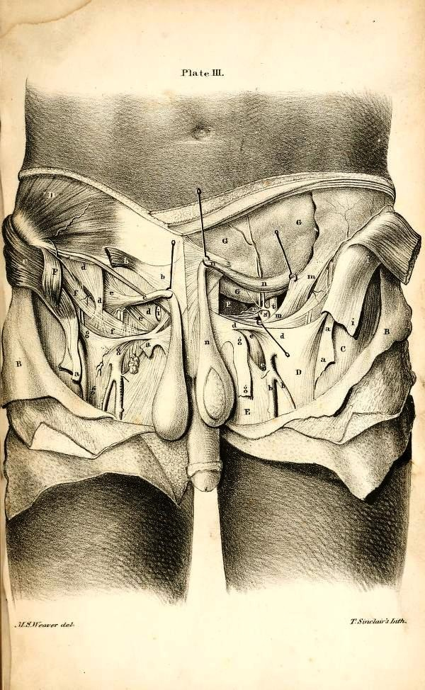 99 best Anatomy images on Pinterest | Acupuncture, Botox fillers and ...