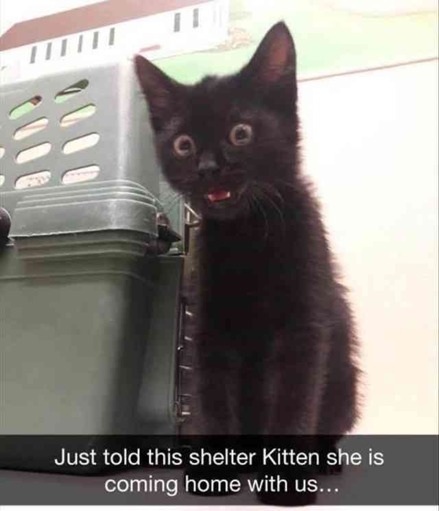 23 Funny Animal Pictures Of The Day