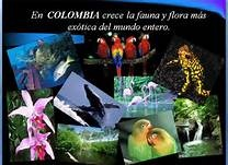guainia colombia - Bing Images
