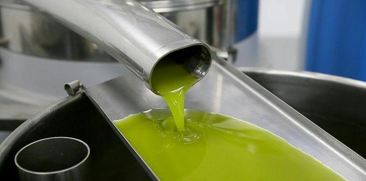 Comprar aceite de oliva virgen extra directamente a la almazara