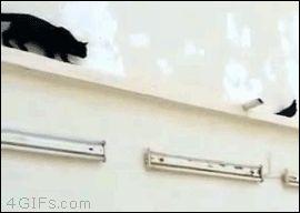 Sociolatte: Pigeon plays cruel trick on cat