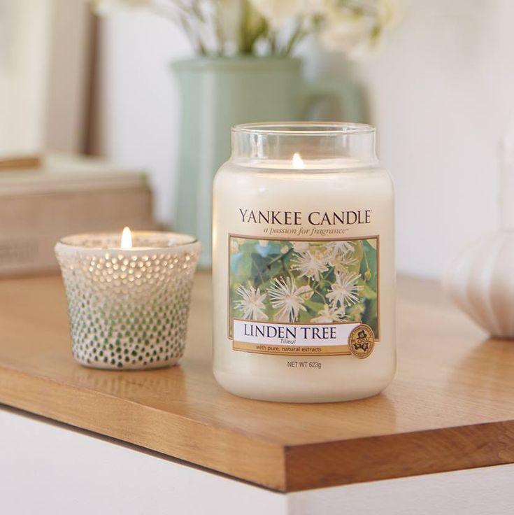 Frescas flores de tilo disfrutadas a través del frondoso verdor de la luz en un relajado día de primavera.