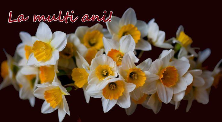 De ziua voastră, tuturor femeilor, vă dorim să aveți numai primăvară în suflet. La mulți ani!