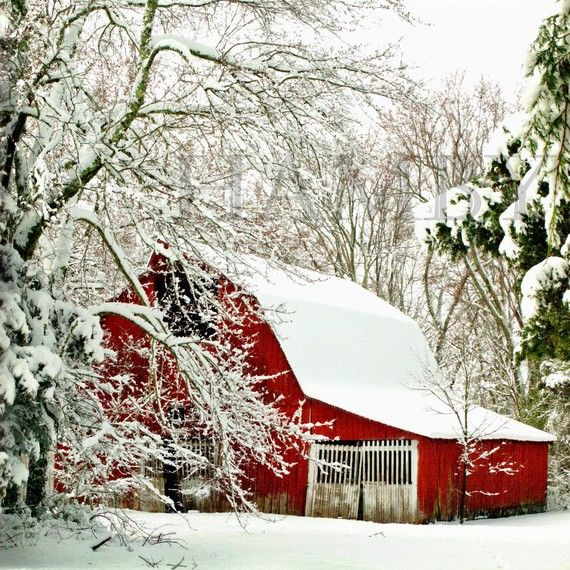 Red barns and white snow