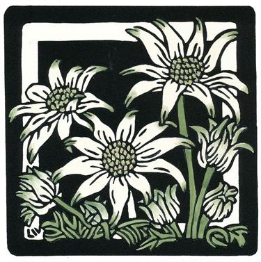 15x15 Flannel Flowers- lynette Weir  Handcoloured Linocut by Lynette Weir  lynetteweir.com