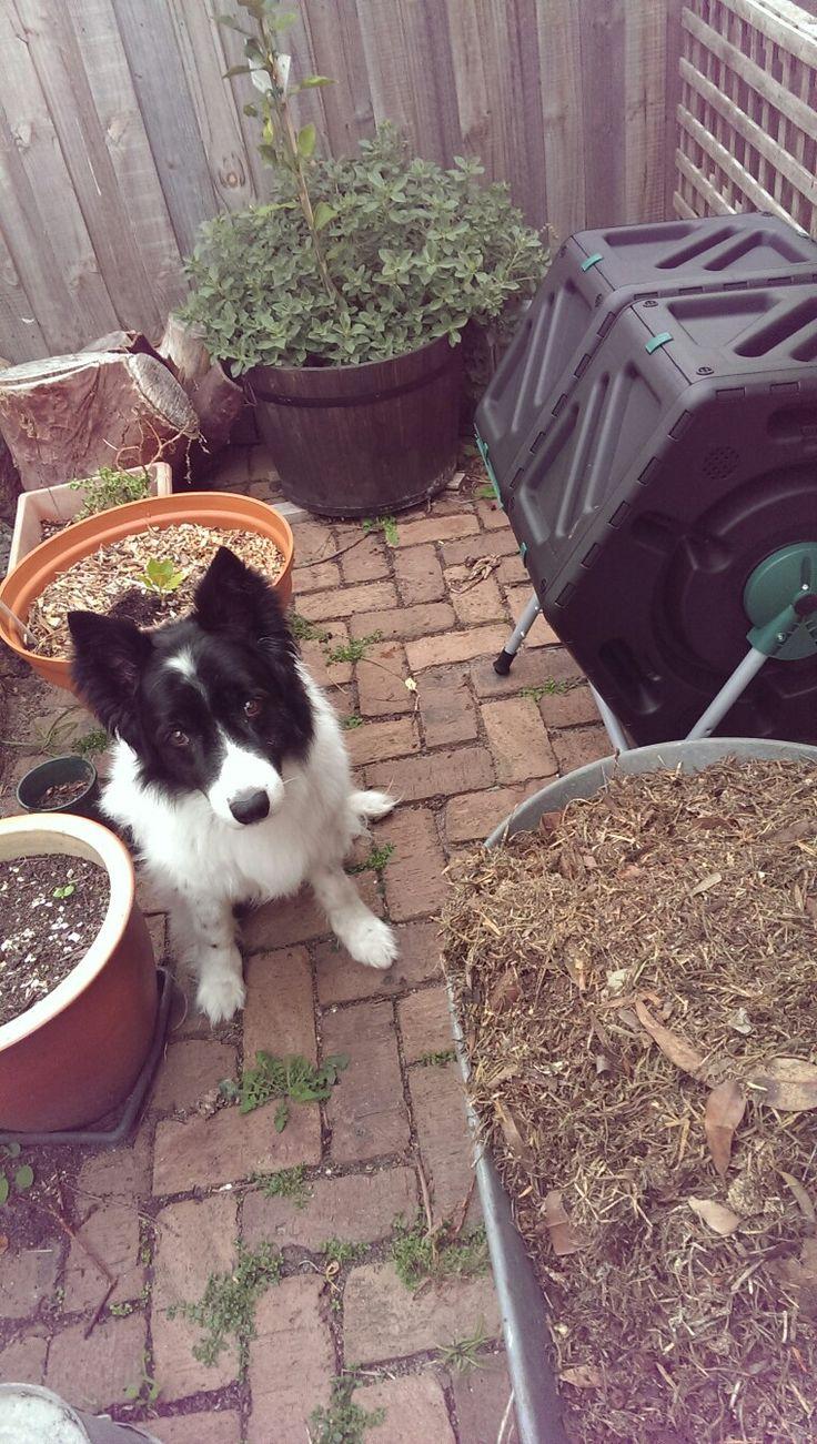My gardening assistant, Stewart.