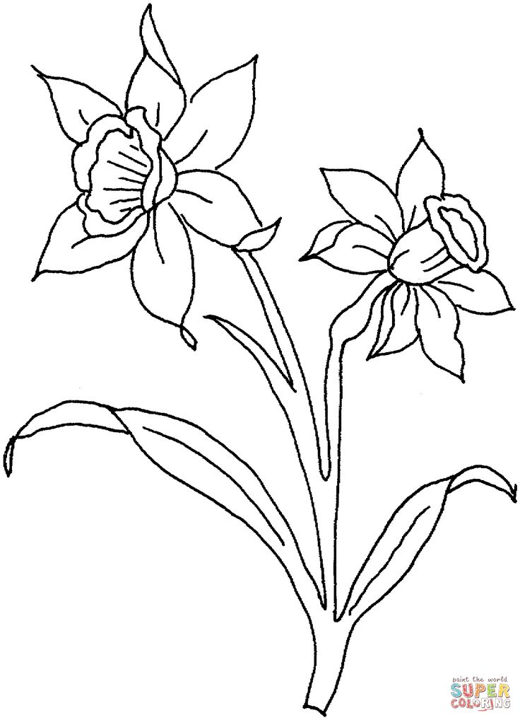 Daffodil March Painting COLORING TEMPLATES Flower