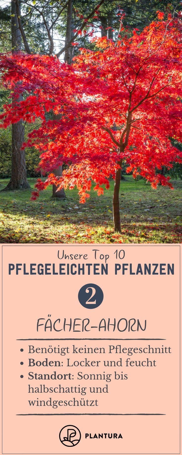 Pflegeleichte Gartenpflanzen: Die Top 10 für draußen – Plantura   Garten Ideen & Tipps   Gemüse, Obst, Kräuter