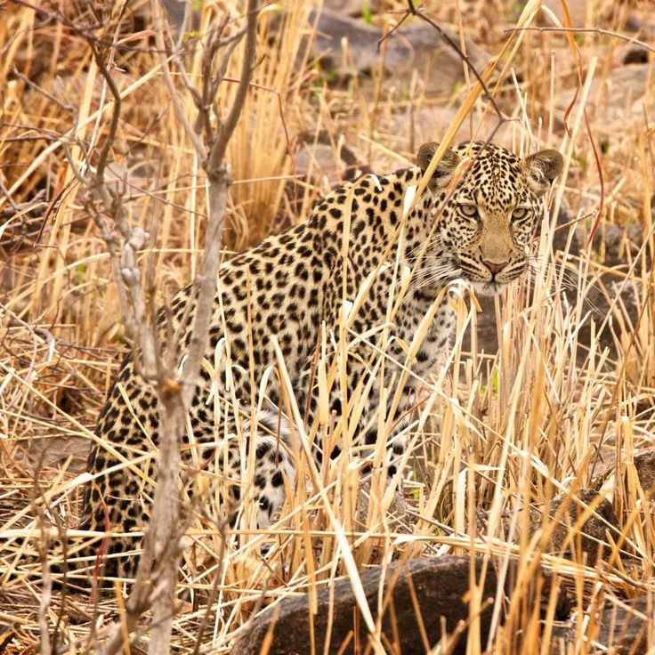 We have spent a wonderful time on safari. Find more about our visit on our blog page http://fripito.com/photo-tips/b2/